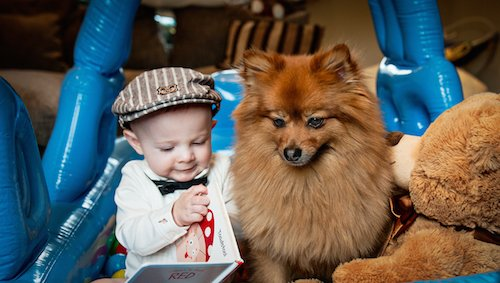 Mr Hendrix, the Pomeranian puppy who inspired a childrens' book series and Aston, Anji's son.