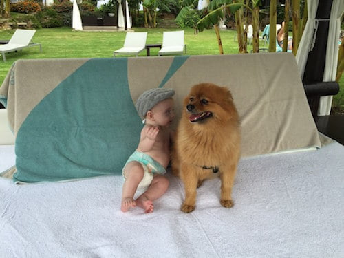 Aston and Mr Hendrix, the Pomeranian puppy who inspired a childrens' book series.