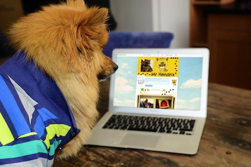Mr Hendrix, the Pomeranian puppy who inspired a childrens' book series checks out his own website.