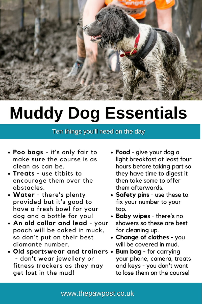 Thinking of taking part in the Battersea Muddy Dog Challenge?