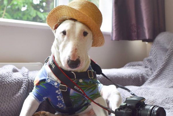 Rocky the Traveller is a Bull Terrier who has visited places all over the world.