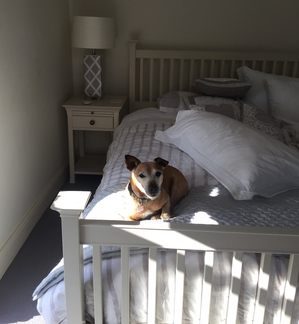 Dog Friendly Suffolk Letheringham Water Mill, Visit England's most Dog Friendly property.