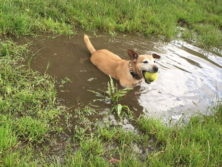 Cooling off after playing with my dog Nerf gun in a muddy puddle!