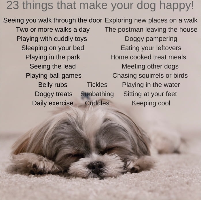 These were the 23 things dog owners said made their pet happy.