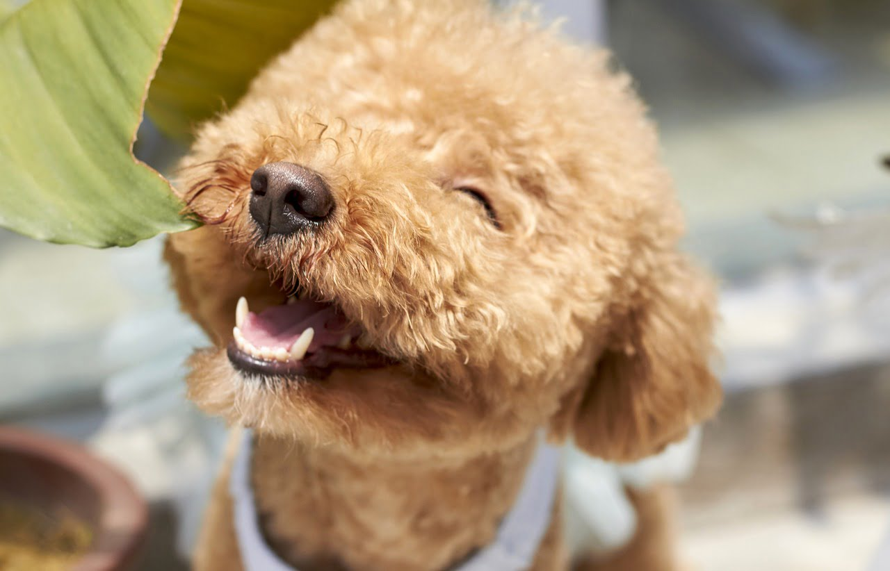 For National Dog Day we look at the 23 things that make dogs happy!