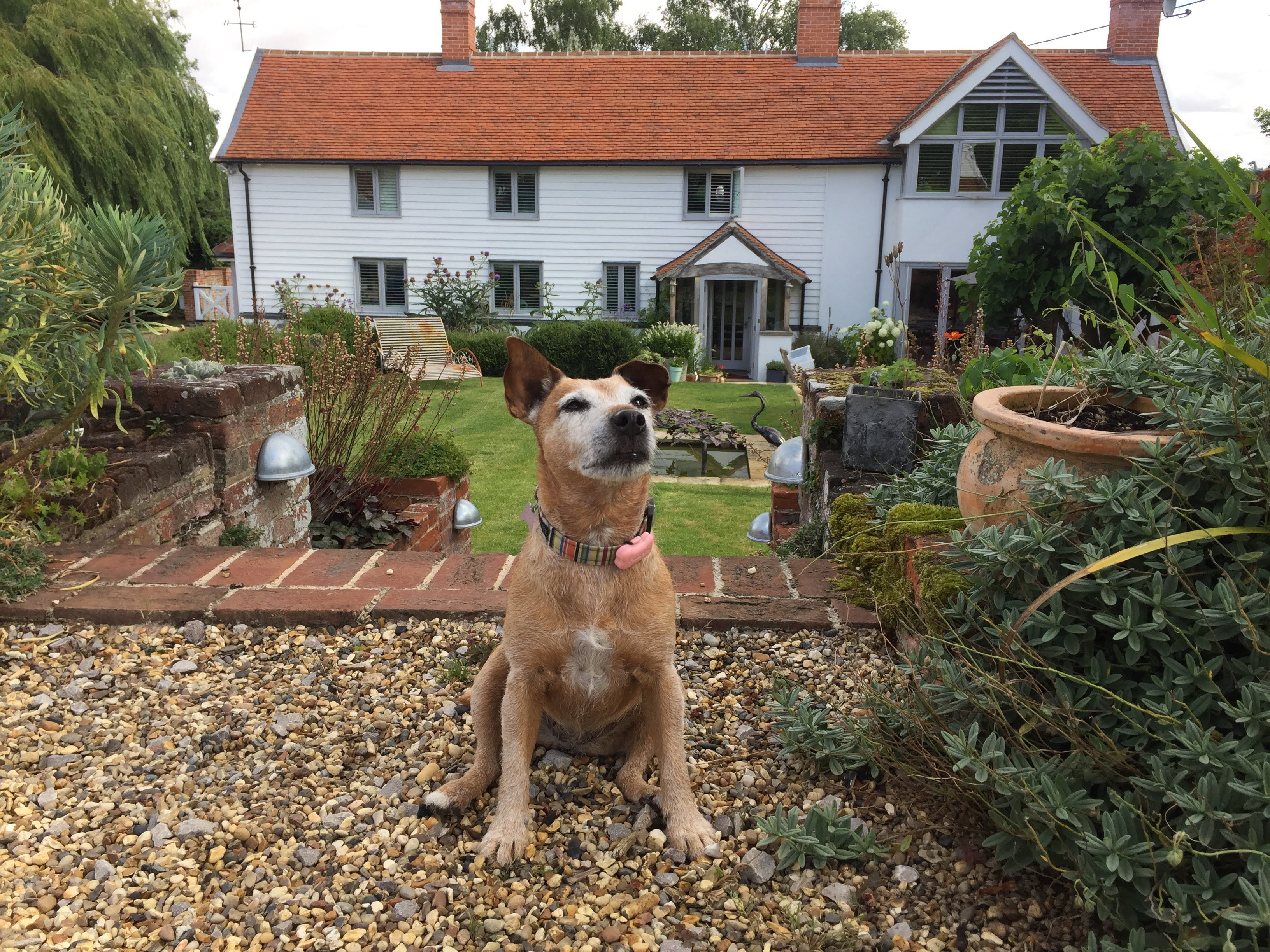 Daisy at Letheringham Water Mill, voted most Dog Friendly business in the UK.