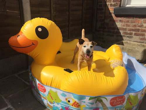 Daisy paddleboarding on her giant inflatable duck in the paddling pool!