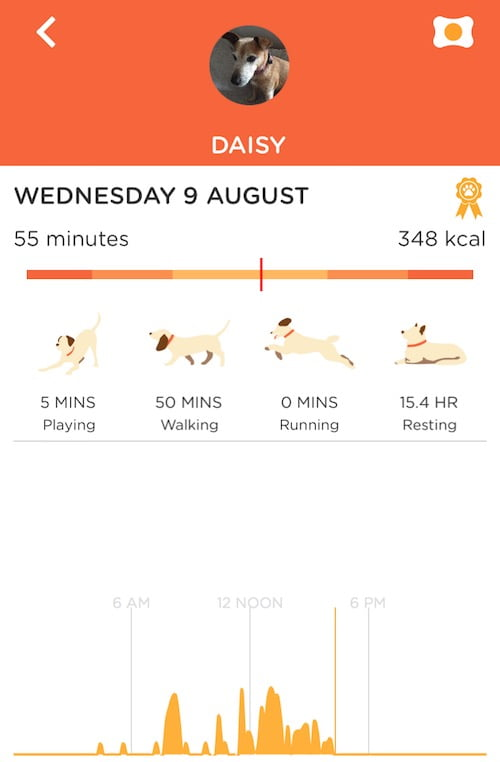 An activity report on a Pit Pat dog tracker.