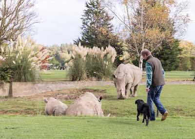 An excited dog meets the rhinos at Cotswold Wildlife Park, the most dog friendly in the UK.