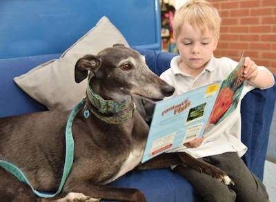 Retired greyhound Hetty pictured during one of her school visits helping children read
