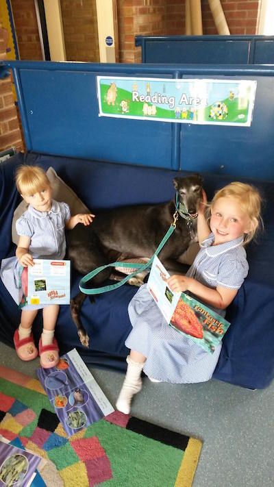 Retired greyhound Hetty pictured during one of her school visits helping children read.
