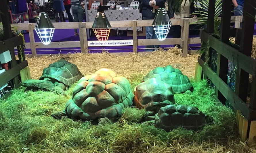 The amazing giant tortoises at the Family Pet Show.