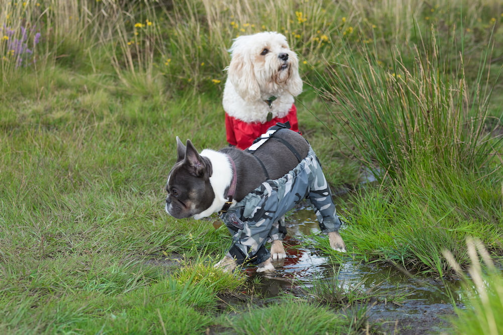 Harriet Sinfield Day decided to make dog trousers after growing fed up with muddy paws.