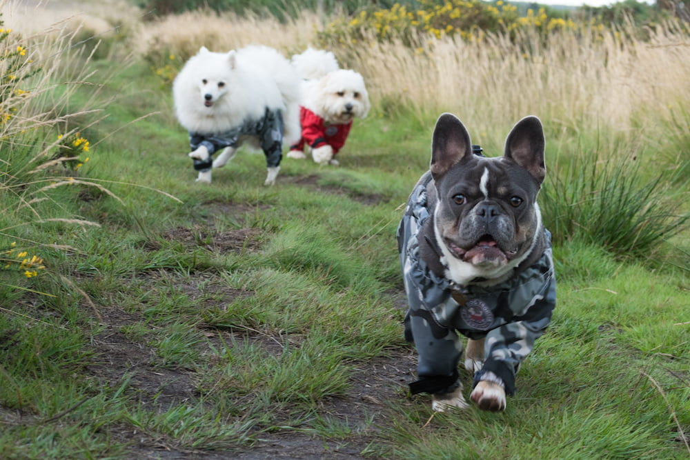 Harriet Sinfield Day created dog trousers to help keep paws pristine!