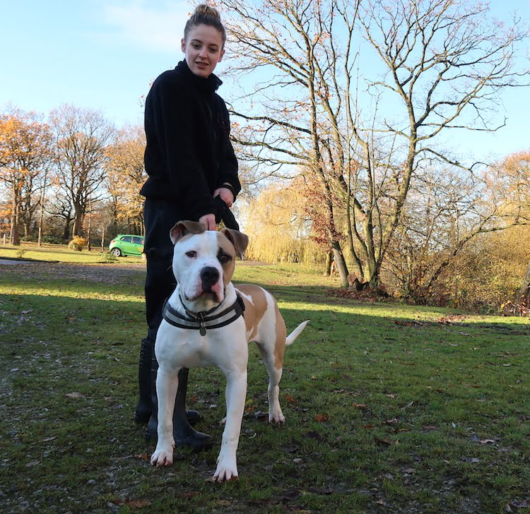 Cheshire Dog's Home try to give dogs like Boris a second chance.
