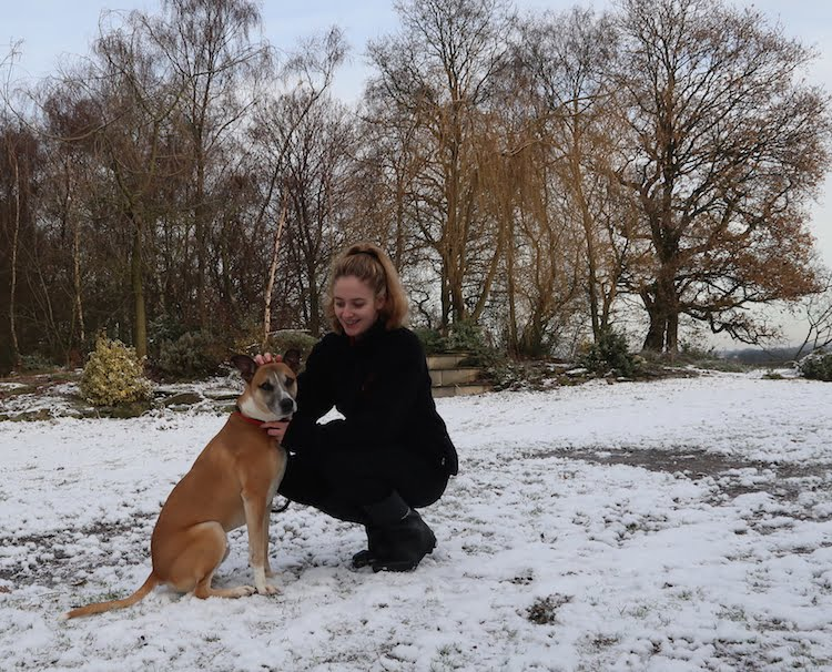 Could you give Champ from Cheshire Dog's Home a second chance?
