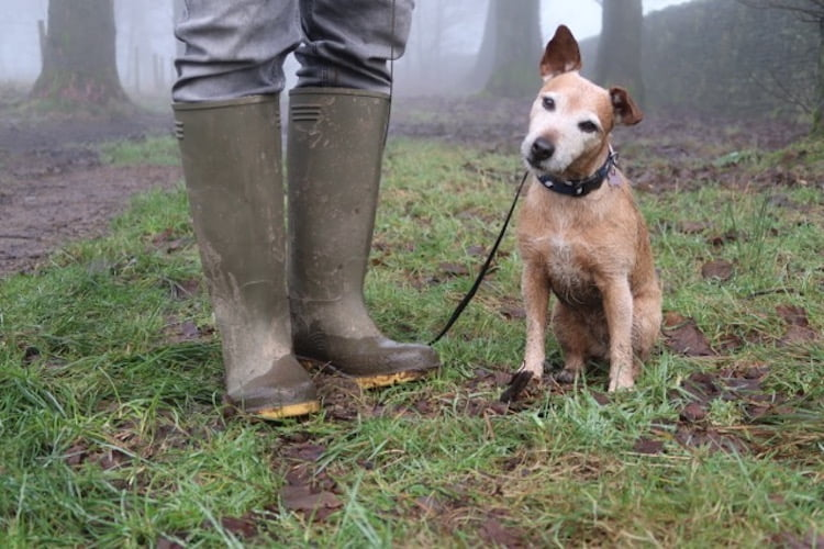 Dog blogger Rachel Spencer talks about tips on how to keep your pet happy and safe at Christmas.