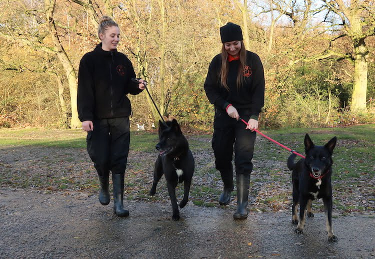 Sadly, older dogs are often dumped in favour of new puppies at Christmas like Ralph and Phoebe