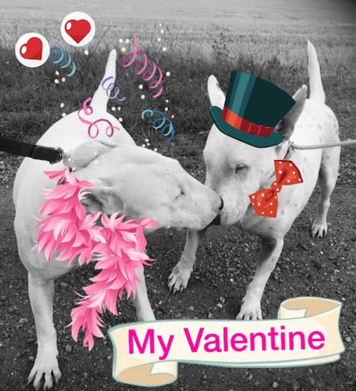 Valentine's ideas for dog owners.