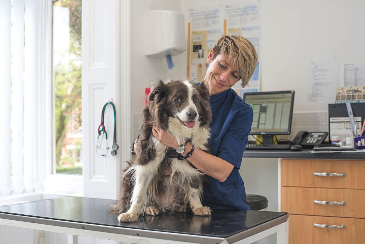 Hannah Capon from Canine Arthritis Management shares her advice on how owners can help their dogs.