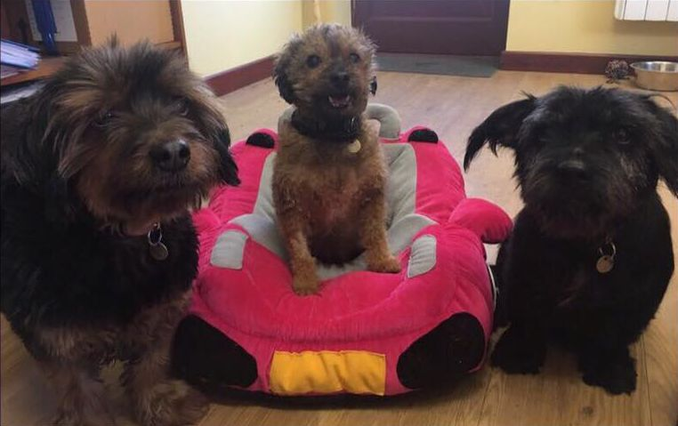 The RSPCA is looking for a home for three senior dogs where they can stay together.