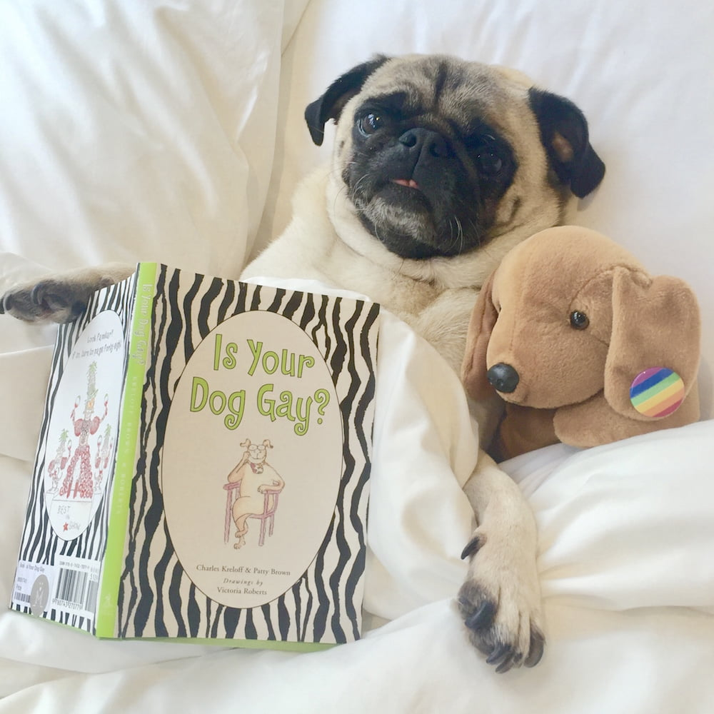Doug the Pug Therapy Dog meets people from all walks of life through his work.
