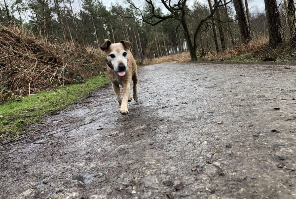Woodland walks are linked to Alabama Rot.