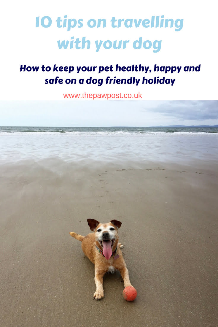 Going on a dog friendly holiday? Here are 10 tips to make sure it runs smoothly!