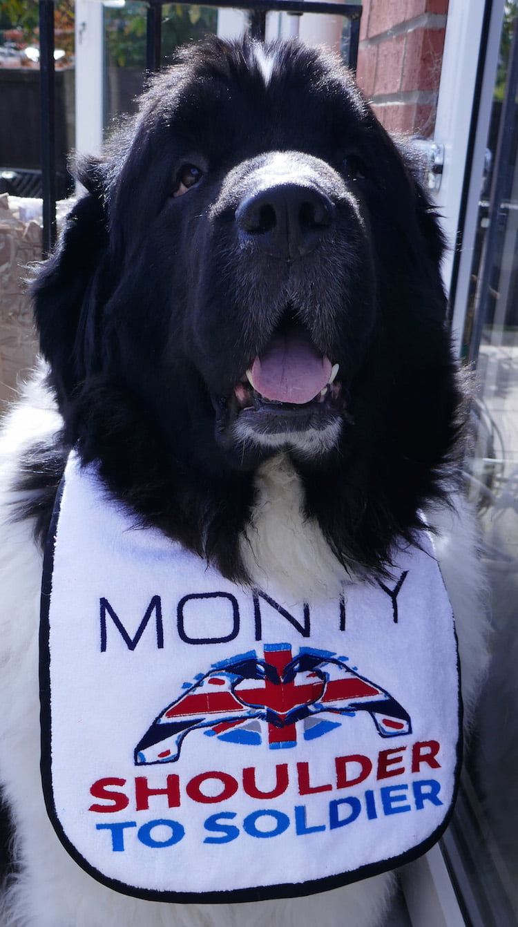 Monty Dogge and his family - owner Mark Sanders talks about life with a large dog.