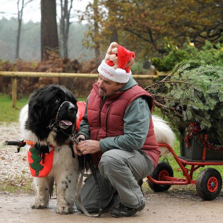 Monty and Friends Save Christmas competition