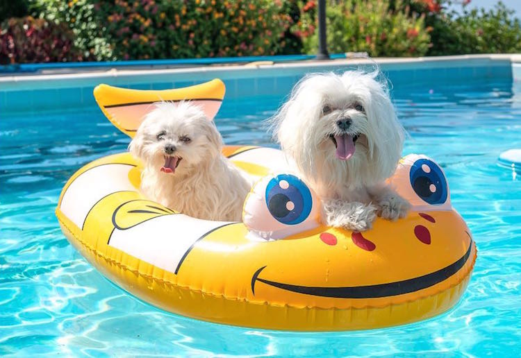 Tips on how to keep your pet cool in the sun