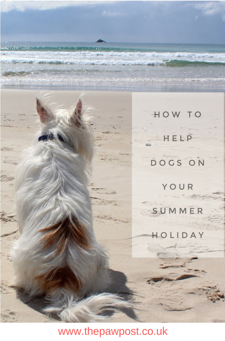 How you can help dogs on your summer holiday  Are you ready for your holidays? Would you like to help dogs in rescue centres who need help and funding? Here's some you can visit.