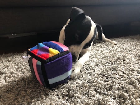 Patch from the Paw Post Pet Blog tries out the Ruffle Snuffle Challenger Cube