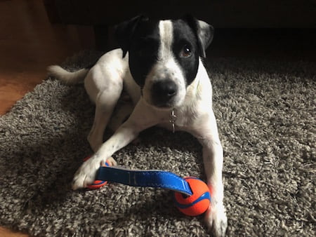 Chuck It Tug Toy review by the Paw Post Pet Blog