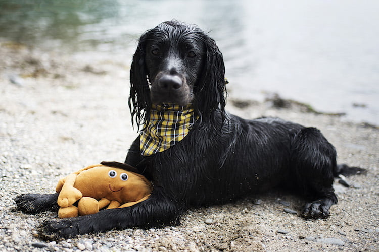 Black dog syndrome and why dark haired pets struggle to find homes.