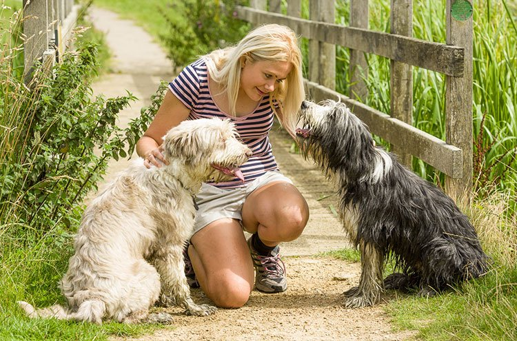 Expert advice from Helen Motteram to help nervous dogs and dogs with anxiety