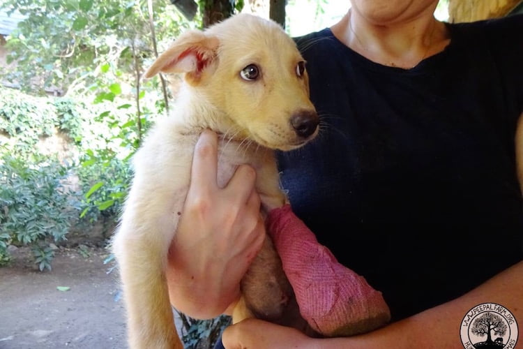 Jyothika Kumar, an animal lover is crowdfunding to rescue an indian streetdog named Ghost