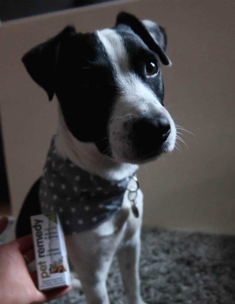 How to help dogs and cats cope with the stress of fireworks
