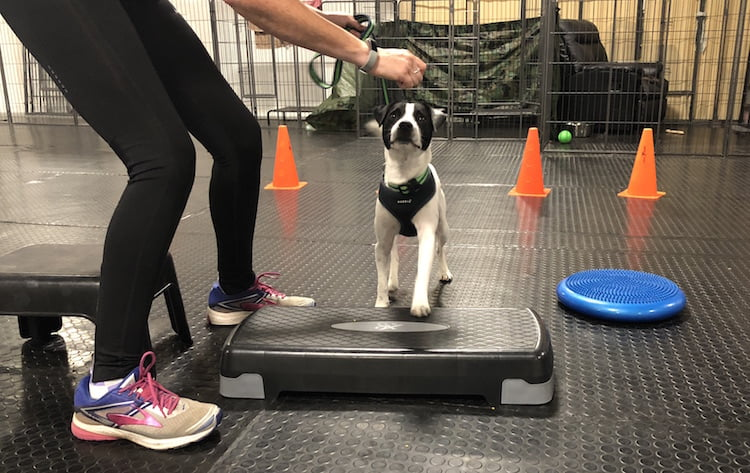 Lindsey Fiddler explains how Pilates can help dogs