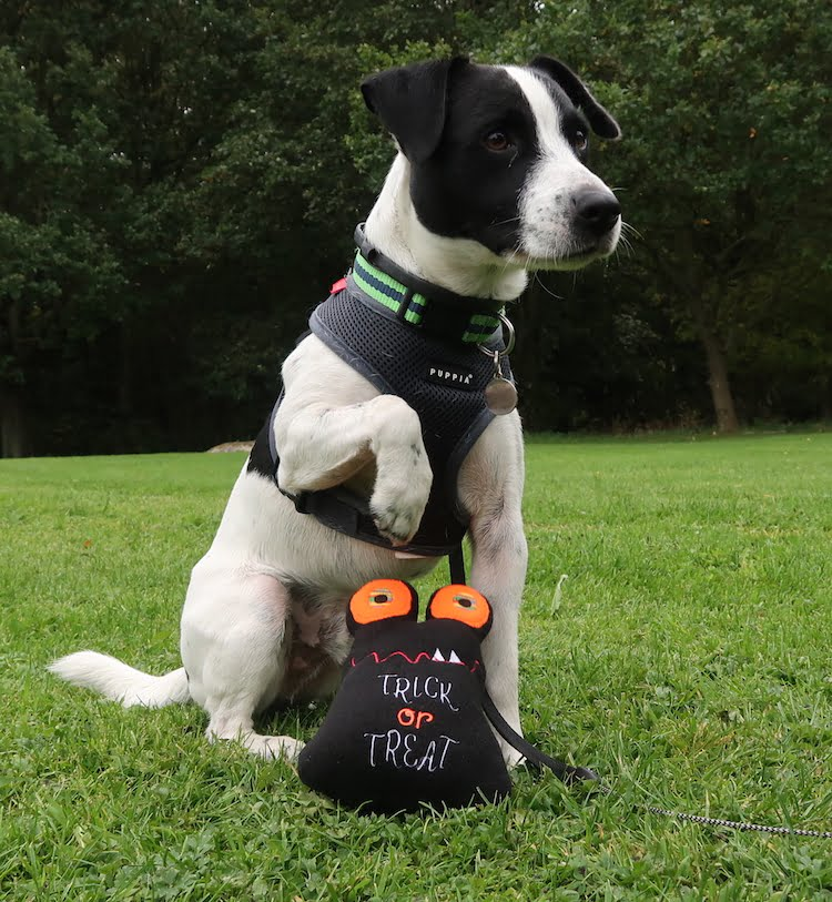 Five safe and fun ways to celebrate halloween with your dog