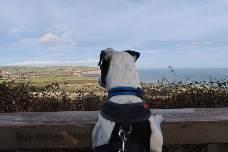 Dog friendly things to go and places to go in Robin Hood's Bay on the Yorkshire coast