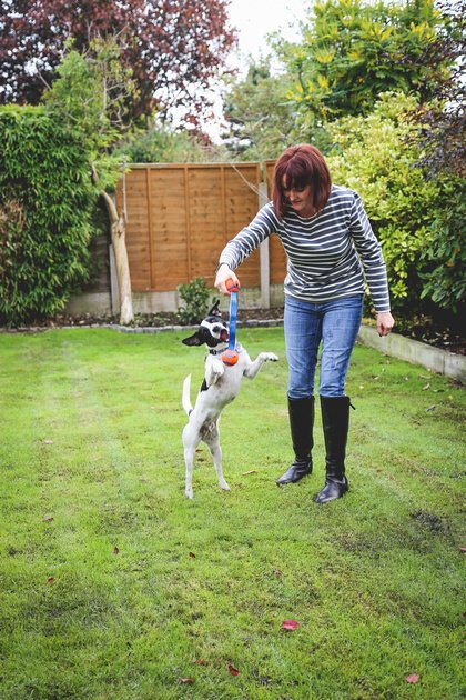 Training Patch the Terrier with Sue McCabe from Muttamorphosis