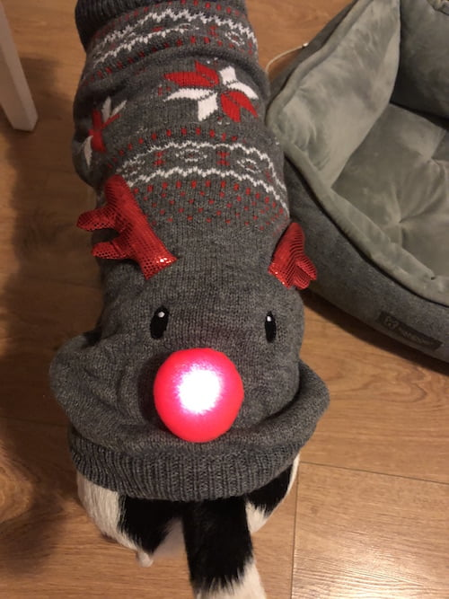 Christmas gift guide and winter essentials for you and your dog from the Paw Post Pet Blog