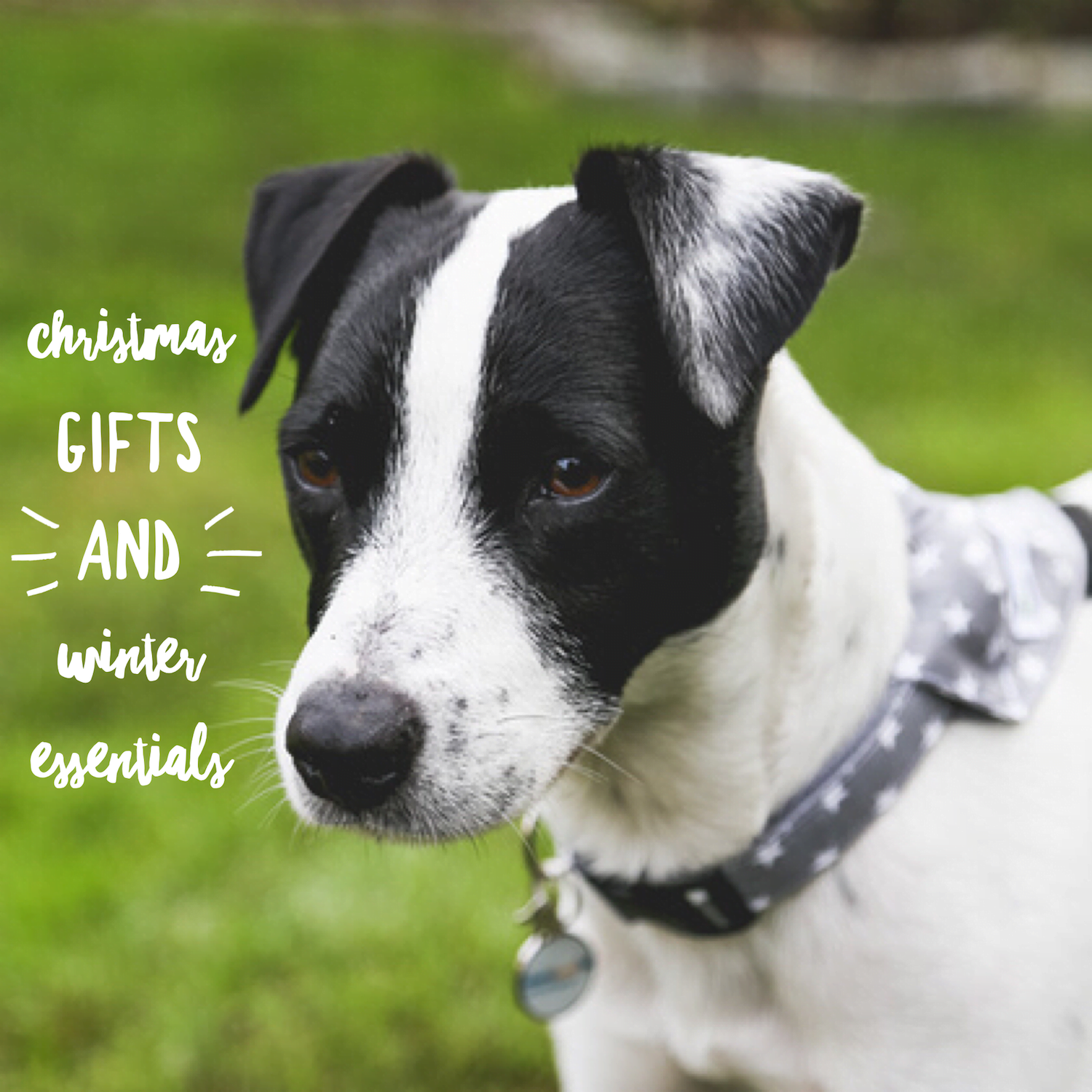 Christmas gift guide and winter essentials for you and your dog ...