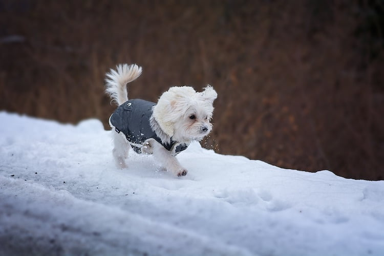 How to care for your dog in the winter with vet Hannah Capon