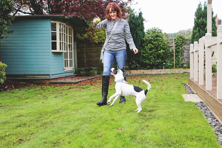 Why do dogs chase squirrels? Behaviourist Sue McCabe explains all.