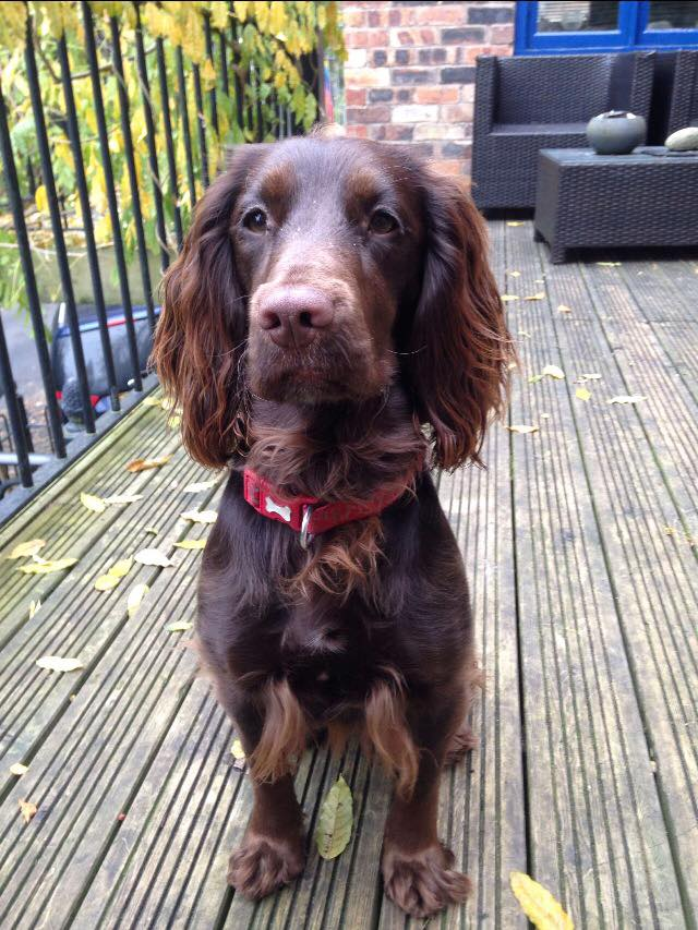 Doglost.co.uk  appeal. Can you help find Albi, Willow and Tilly