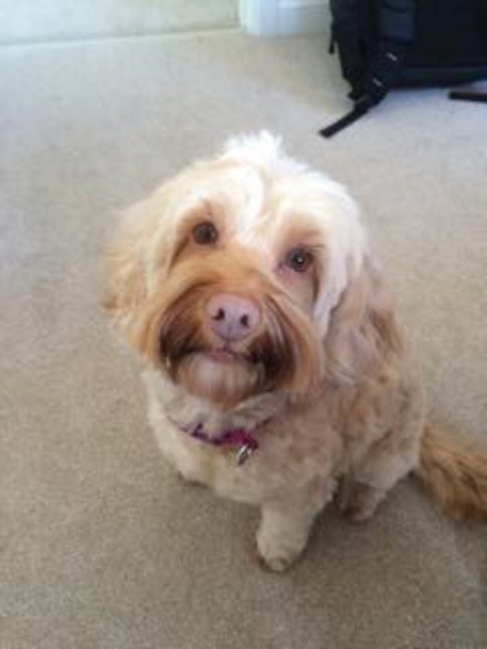Doglost.co.uk  appeal. Can you help find Izzy, Dana, Ruby and Beetle