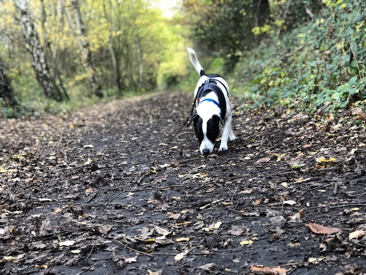 Training a rescue terrier - advice and tips from behaviourist Sue McCabe
