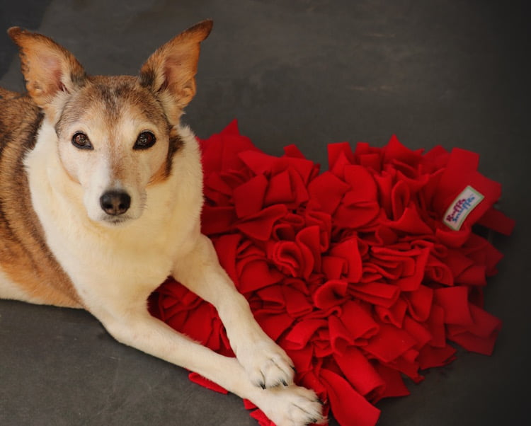 Valentine's Day gift ideas for dogs and their owners